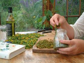 oldc-herbs WP